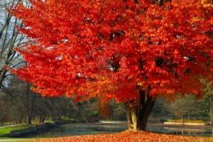 La Naturaleza arbre-300x200